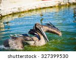 Pelican Floats On The Water An...