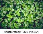 Vintage Style Green Fresh. Rai...
