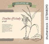ginger flower  plant and root... | Shutterstock .eps vector #327848090