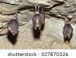 lesser horseshoe bat ... | Shutterstock . vector #327870326