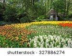 Tulips In Keukenhof Flower...