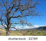 tree in upper bidwell park ...   Shutterstock . vector #32789