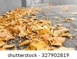 Autumn Fallen Leaves On A...