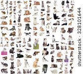 Stock photo group of cats in front of white background 328101644