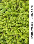 young branches of decoratively... | Shutterstock . vector #32825578