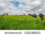 cows grazing in a meadow in... | Shutterstock . vector #328288820