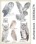 Hand Drawn Owl Vector Set