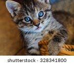 Stock photo little blue eyes this playful little kitten stopped just long enough to capture the gaze of those 328341800