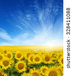 Field Of Sunflowers And Sun In...