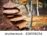 Bracket Fungus Growing From Th...
