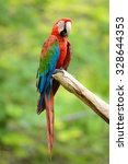 beautiful green winged macaw ... | Shutterstock . vector #328644353