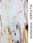 Eucalyptus Tree Bark Texture...