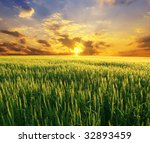 field of wheat on a background... | Shutterstock . vector #32893459