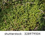 Background  Moss Green  Common...