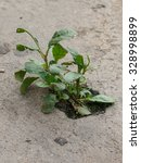 plants grow up on the cement... | Shutterstock . vector #328998899