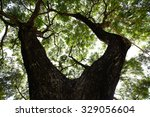 forest trees. nature green wood ...   Shutterstock . vector #329056604