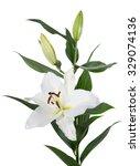 lilium orient flower isolated | Shutterstock . vector #329074136