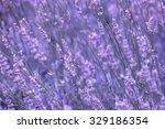 purple violet color sunny... | Shutterstock . vector #329186354