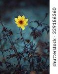 yellow meadow flowers. flowers... | Shutterstock . vector #329186360
