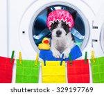 Dog Inside A Washing Machine...