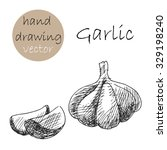 hand drawn garlic. monochrome... | Shutterstock .eps vector #329198240