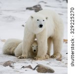 polar bear with a cubs in the... | Shutterstock . vector #329225270