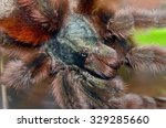 spider   Shutterstock . vector #329285660