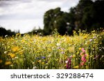 Wild Field Of Flowers