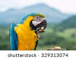 beautiful colorful macaw in a... | Shutterstock . vector #329313074
