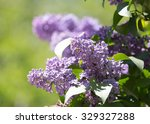 Beautiful Flowers On A Lilac...