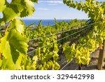 vineyards of the alella wine...