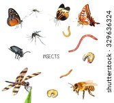 illustration of the insects ... | Shutterstock . vector #329636324