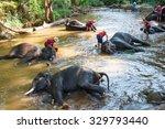 Thai Elephants Taking A Bath...