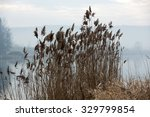 the reed in the morning | Shutterstock . vector #329799854