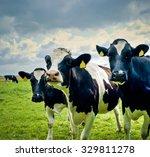cows in the field | Shutterstock . vector #329811278