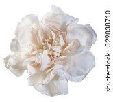 Carnation Beige