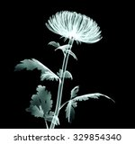 xray image of a flower ... | Shutterstock . vector #329854340