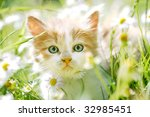 Stock photo cute little cat in spring flowers and grass looking at the camera 32985451