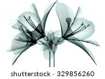 Xray Image Of A Flower Isolate...