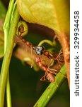 red ants team work | Shutterstock . vector #329934458