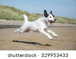 Stock photo dog 329953433