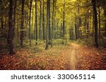 autumn trees in the forest | Shutterstock . vector #330065114