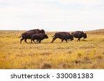 Buffalo Running On The Prairie