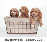 Stock photo cute puppies 330097223