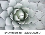 Small photo of Large Century Plant in Landscaped Flower Bed