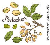 pistachio nuts with leaves and... | Shutterstock .eps vector #330156269