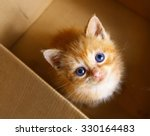 Stock photo red little blue eye kitten in the box 330164483