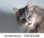 The Cat Hisses  Gapes  Grins....