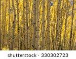 the sun is back lighting the... | Shutterstock . vector #330302723