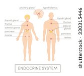 the endocrine system of a human.... | Shutterstock .eps vector #330315446
